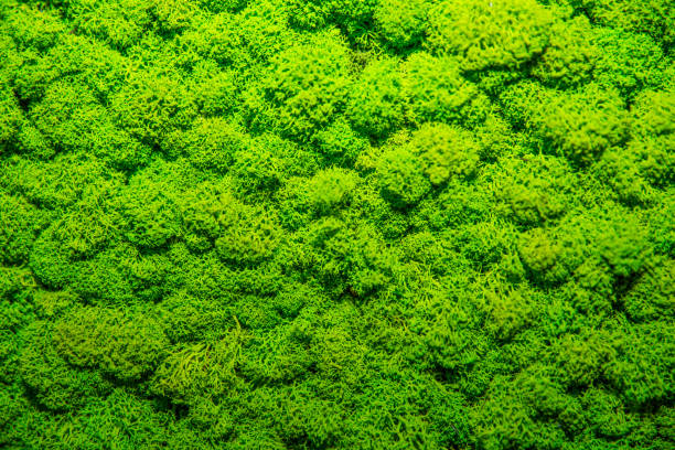 green moss background, mossy texture - moss stock pictures, royalty-free photos & images