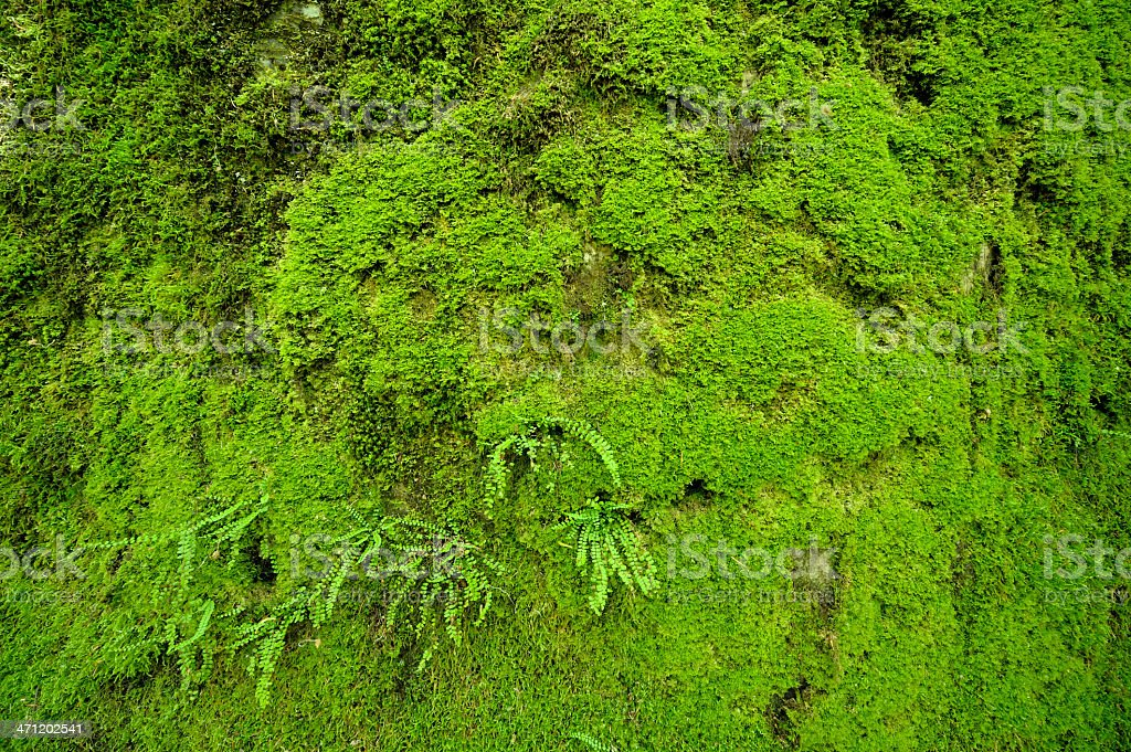 Green moss background royalty-free stock photo