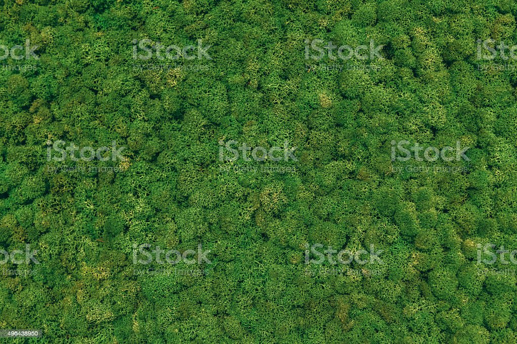 Green moss background. stock photo