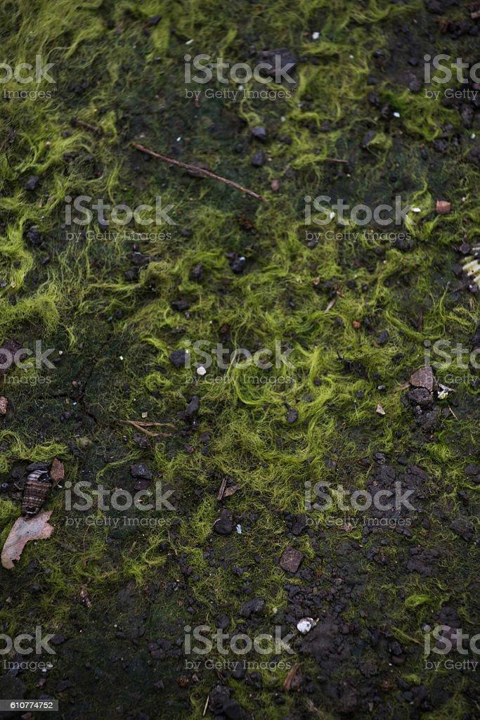 Grünem Moos Hintergrund  – Foto