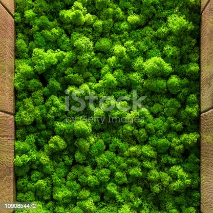 green moss background texture close up Top view interior design.