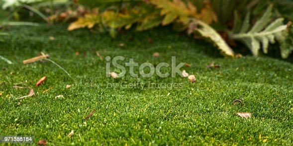 Detail of green moss with dry leaves. Selective focus. Copy space