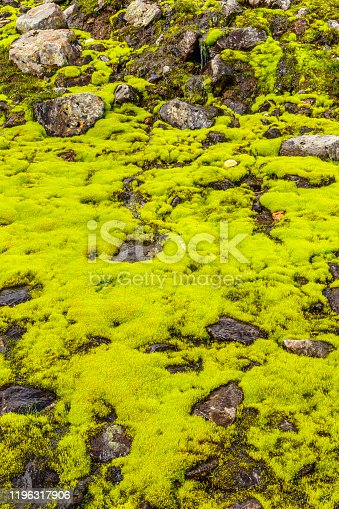 Green moss covering the ground in the mountains