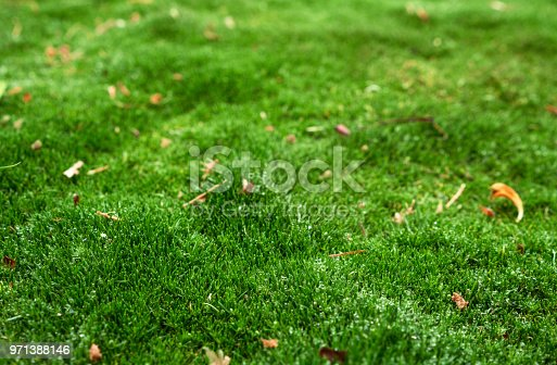 Detail of green moss. Selective focus. Copy space