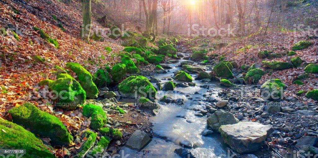 Green moss in creek stock photo