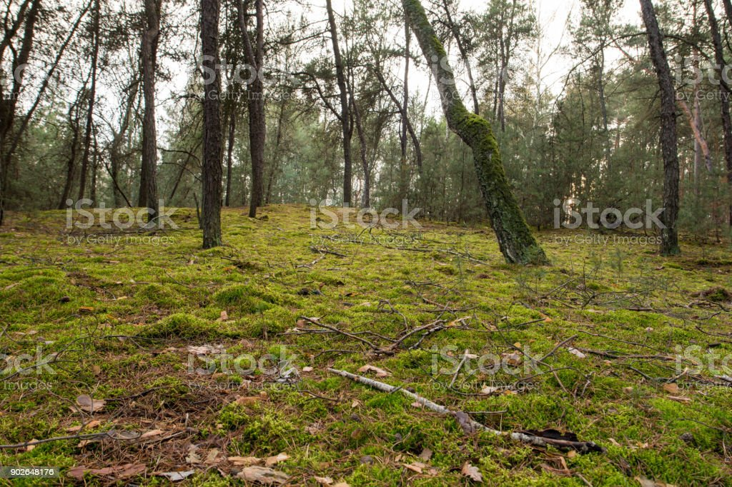 green moss in forest stock photo