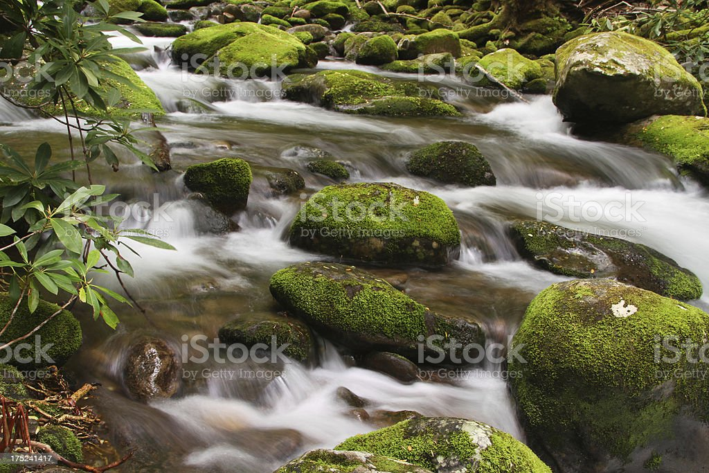 Green Moss Mountain Stream Smoky Mountains Tennessee royalty-free stock photo