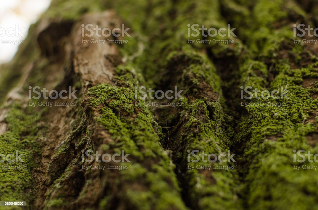 Green moss on a tree royalty-free stock photo
