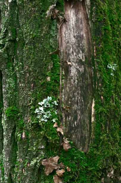 musgo verde en un tronco de árbol - foto de stock