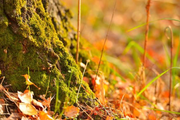 Cтоковое фото Green moss on a tree trunk