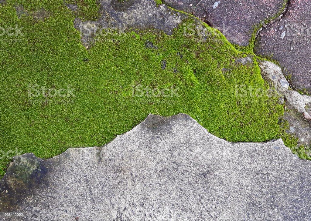 zielony mech na brudnej podłodze cementowej - Zbiór zdjęć royalty-free (Abstrakcja)