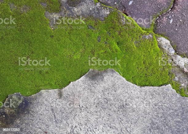 Zielony Mech Na Brudnej Podłodze Cementowej - zdjęcia stockowe i więcej obrazów Abstrakcja