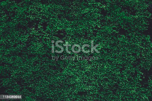 Green moss on old concrete wall. green moss nature dark green tone background