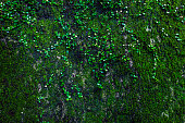 istock Green moss on rock 497411310