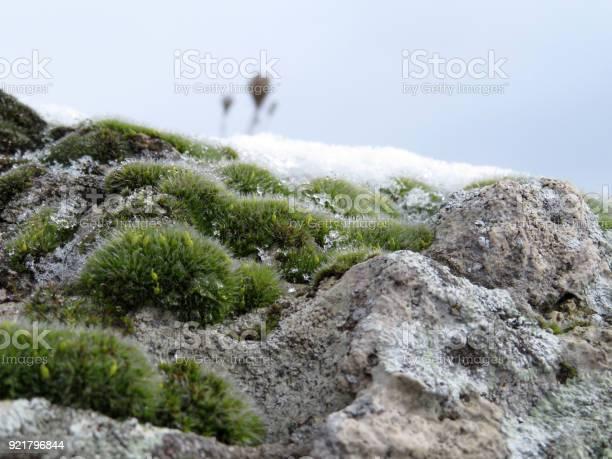Photo of Green moss on rocks closeup