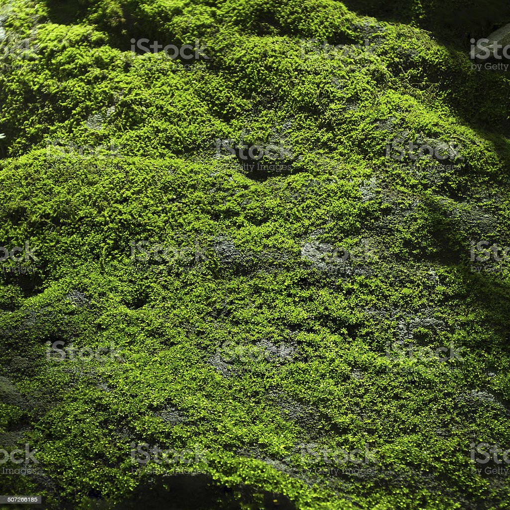 Green Moss on the rock stock photo