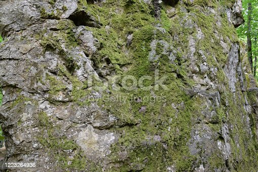 Green moss on the rock. A stone overgrown with a bhomme