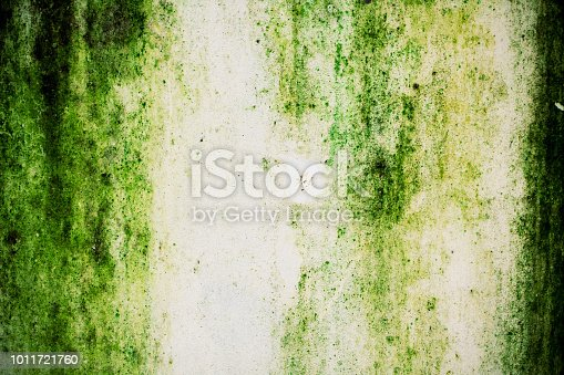 Green moss on the wall background