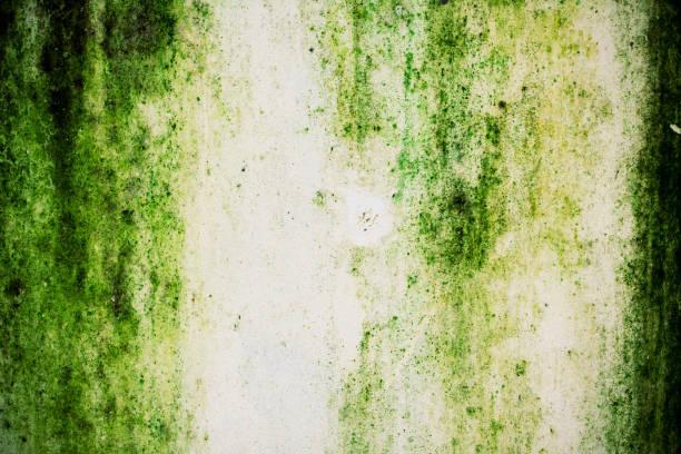 groene mos op de muur achtergrond - meeldauw stockfoto's en -beelden