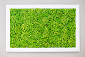 istock Green moss on the wall in the form of a picture. Beautiful white frame for a picture. Ecology 1253315204