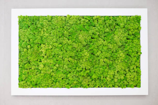 Green moss on the wall in the form of a picture. Beautiful white frame for a picture. Ecology Green moss on the wall in the form of a picture. Beautiful white frame for a picture. Ecology. moss stock pictures, royalty-free photos & images