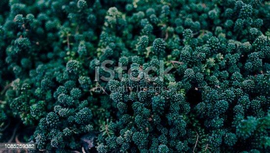 istock green moss pattern 1085259382