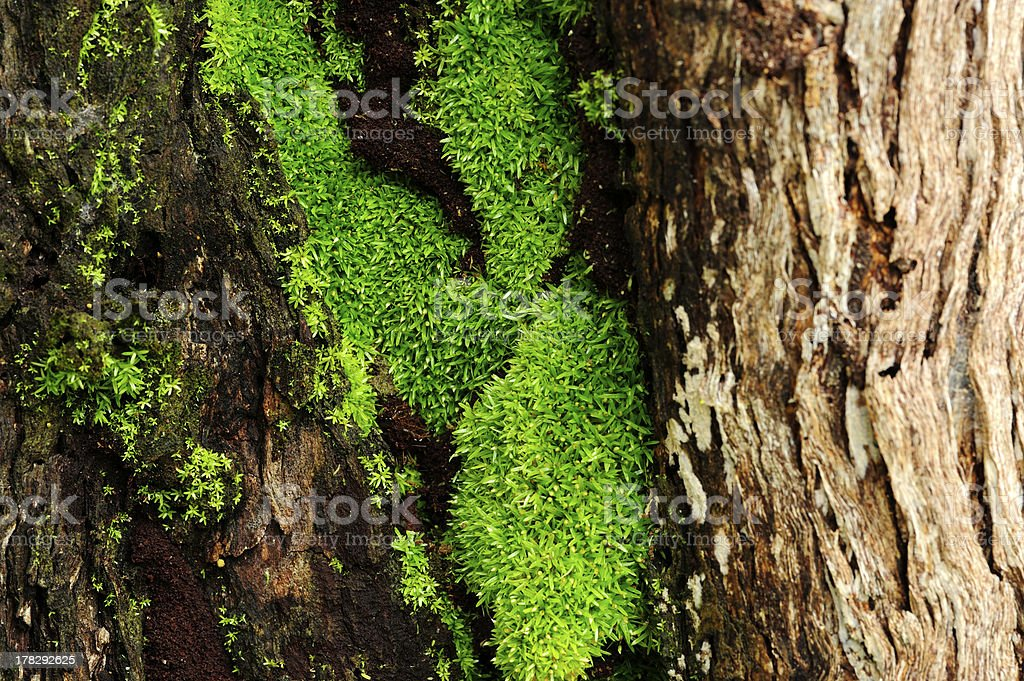 Green moss royalty-free stock photo
