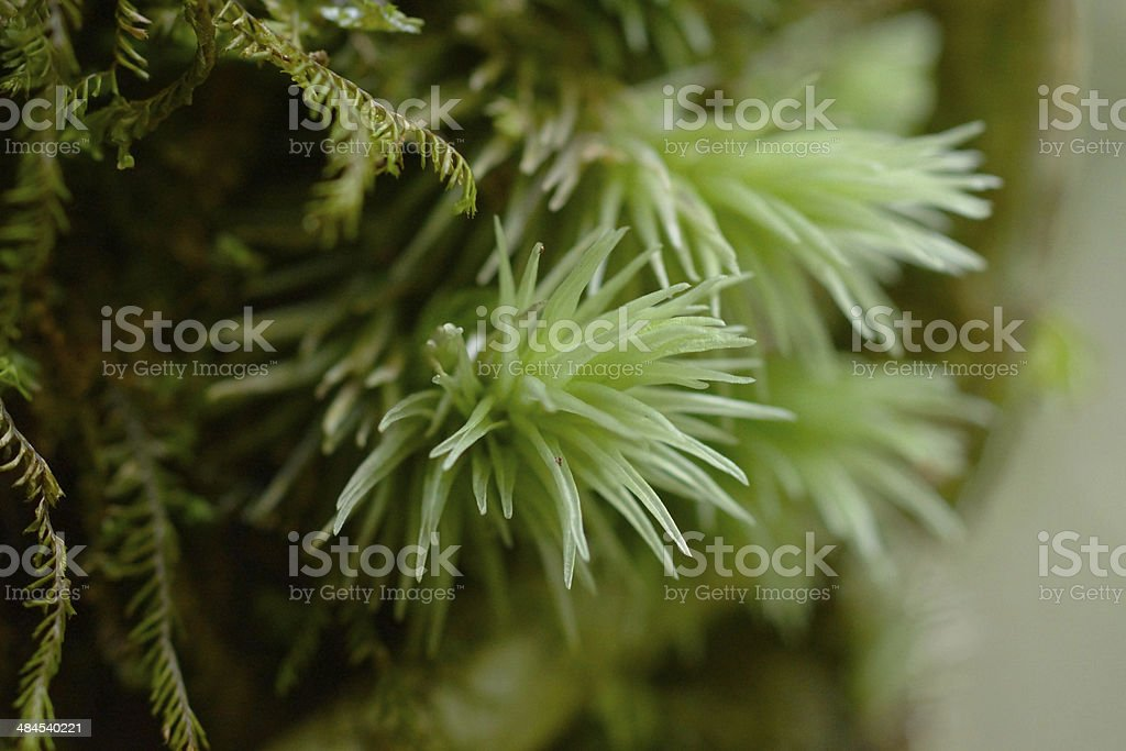 Green MOSS. stock photo