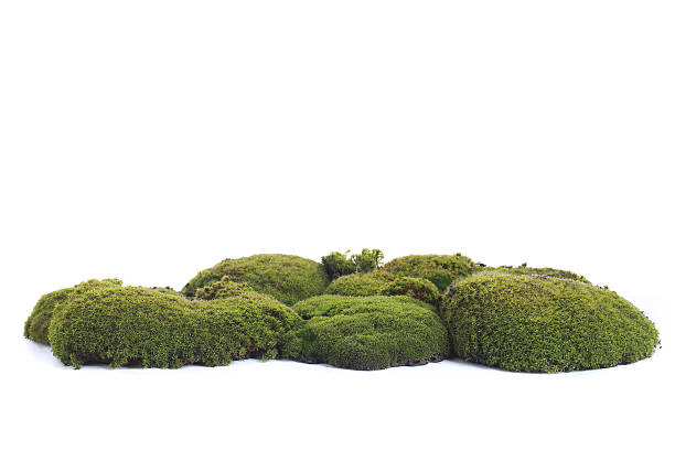 Green moss stock photo