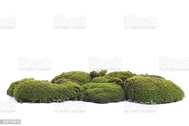 Photo of Green moss