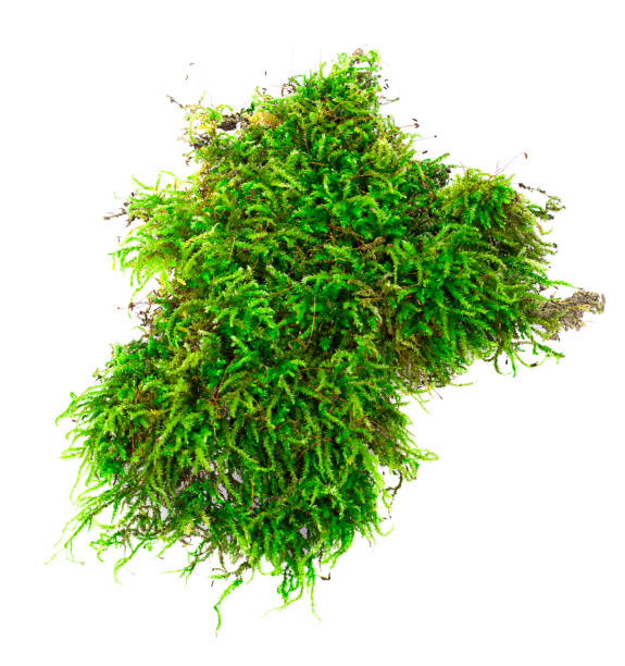 green moss. - moss stock pictures, royalty-free photos & images