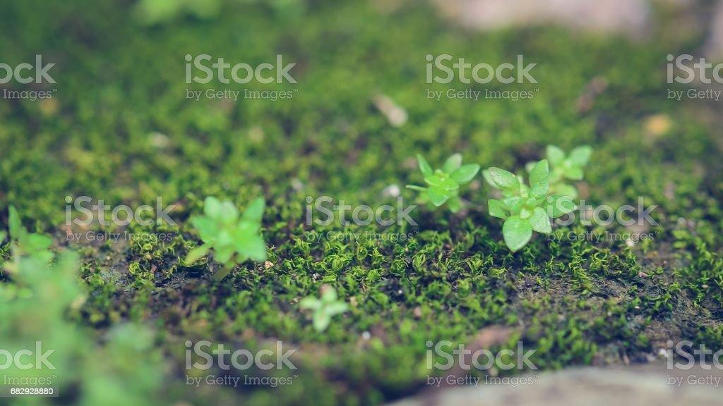 Green moss plant foto de stock libre de derechos