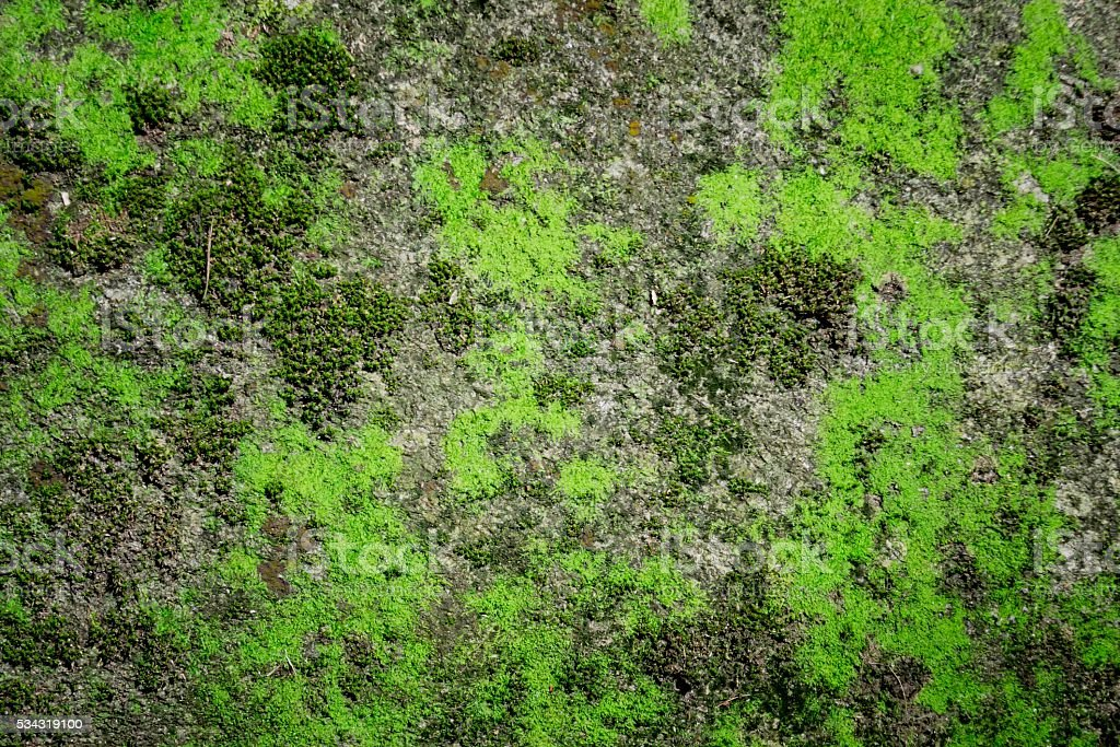 Green moss texture , Nature background. stock photo