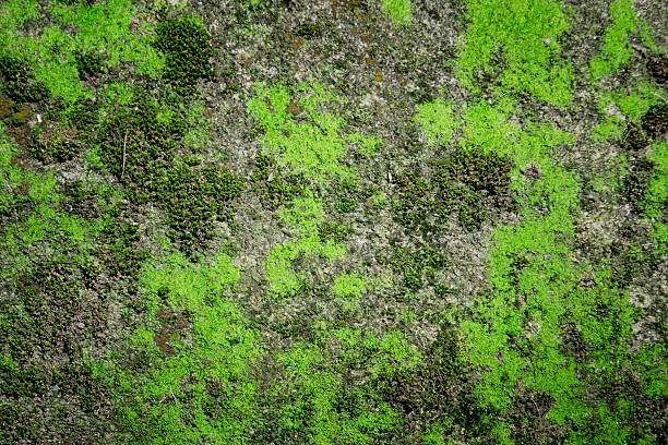green moss texture , nature background. - moss stock pictures, royalty-free photos & images