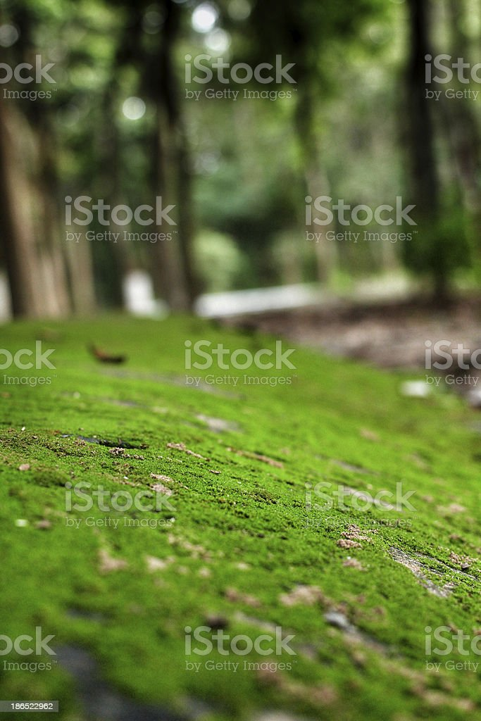 green moss ure. royalty-free stock photo