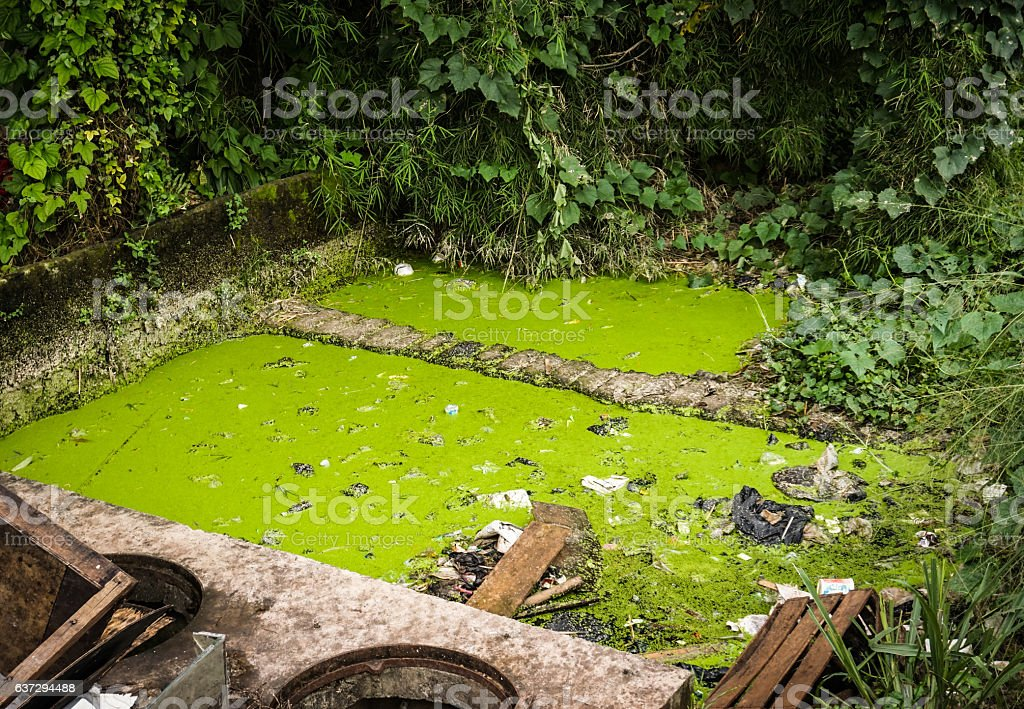 green mossy dirty ditch at backyard photo taken in Semarang stock photo