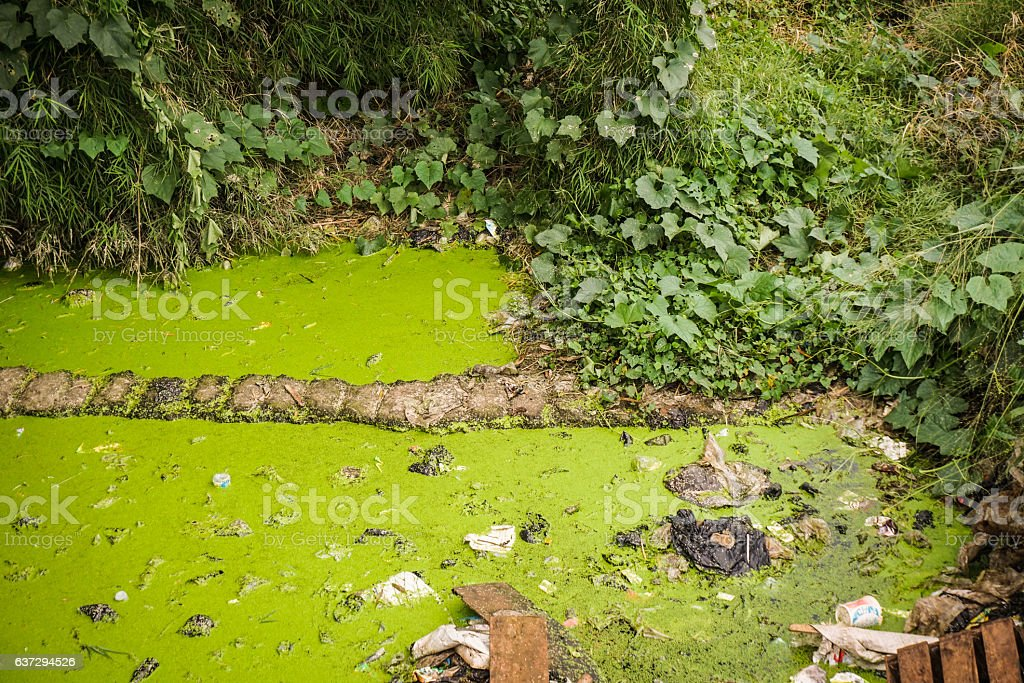 green mossy dirty ditch photo taken in Semarang Indonesia stock photo