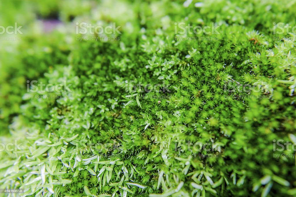 Green Mossy royalty-free stock photo