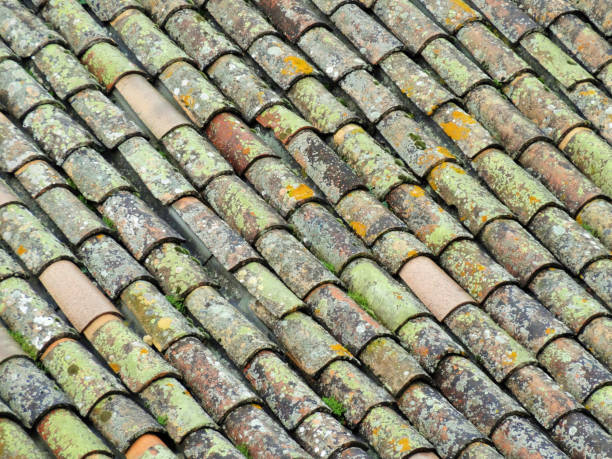Green mossy tiles pf southern france stock photo