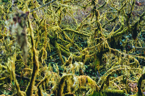 Green mossy trees in a forest