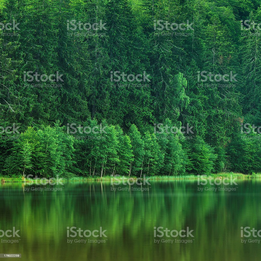 Green mountain lake with pine forest royalty-free stock photo
