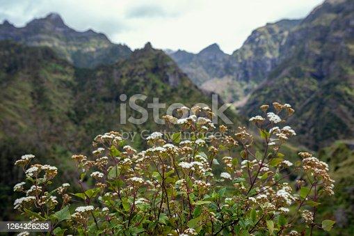 istock Green Mountains 1264326263