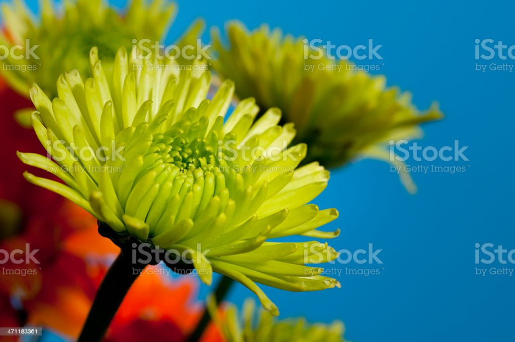 Green Mum royalty-free stock photo