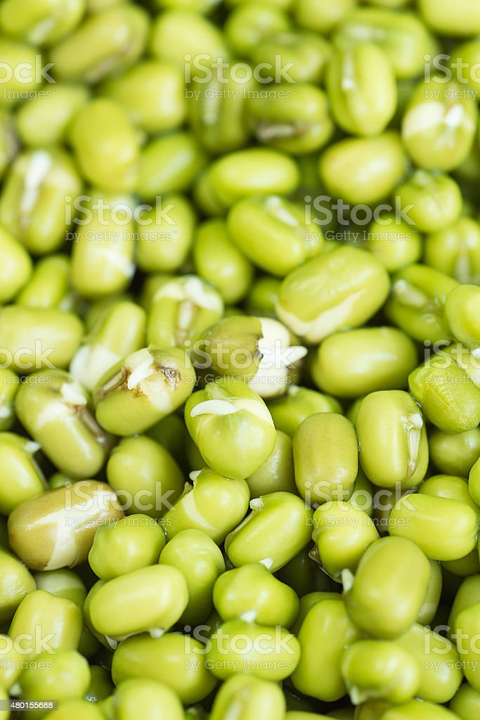 Green mung beans stack after soaked in water. stock photo