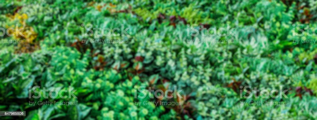 Green natural background of out of focus stock photo