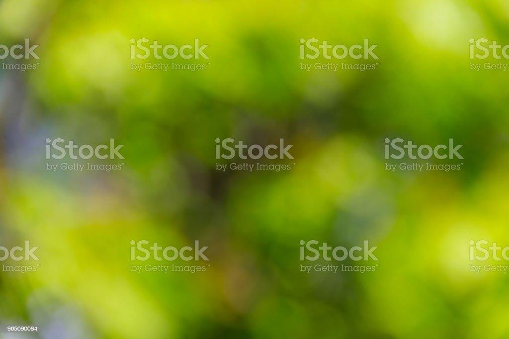 Green natural blurred abstract background zbiór zdjęć royalty-free