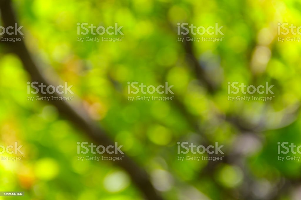 Green natural blurred abstract background royalty-free stock photo