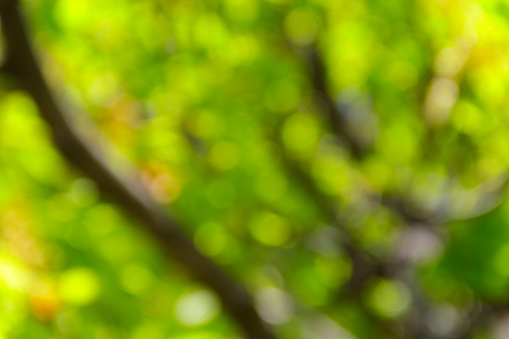 Green Natural Blurred Abstract Background Stock Photo - Download Image Now