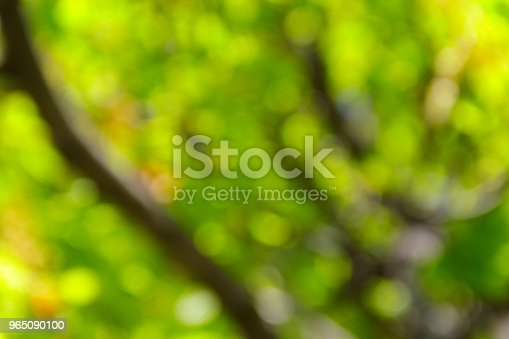Green Natural Blurred Abstract Background Stock Photo & More Pictures of Abstract