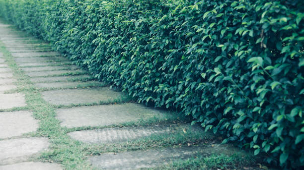 Green natural plants around a walkway of a park stock photo